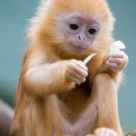 Cutest Monkey Species