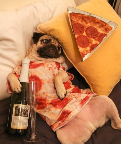 pug wants pizza