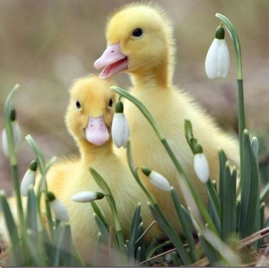 Facts About Ducks And Cute Duck Names Holy Cuteness