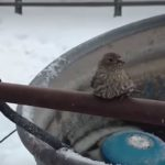 Man Rescues Bird Frozen to Metal Pole