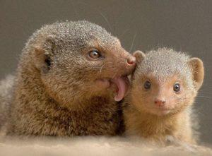 Cutest Carnivores